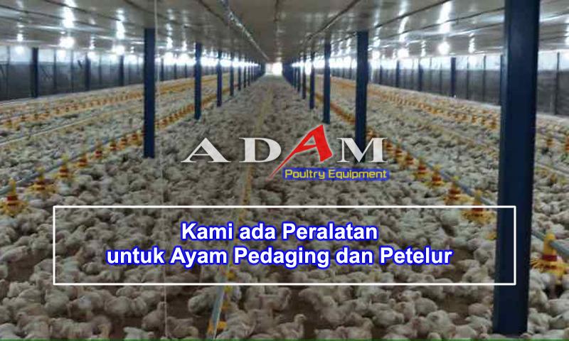 kandang broiler 1 super feeder otomatis alat bagi pakan ayam unggas ternak peternakan adam poultry malang